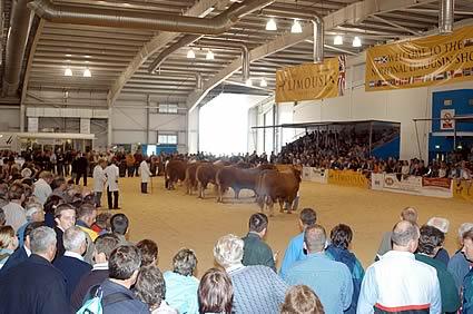 Flashback to 2004 ILC National Limousin Show Ingliston