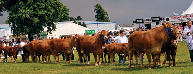Limousin Parade